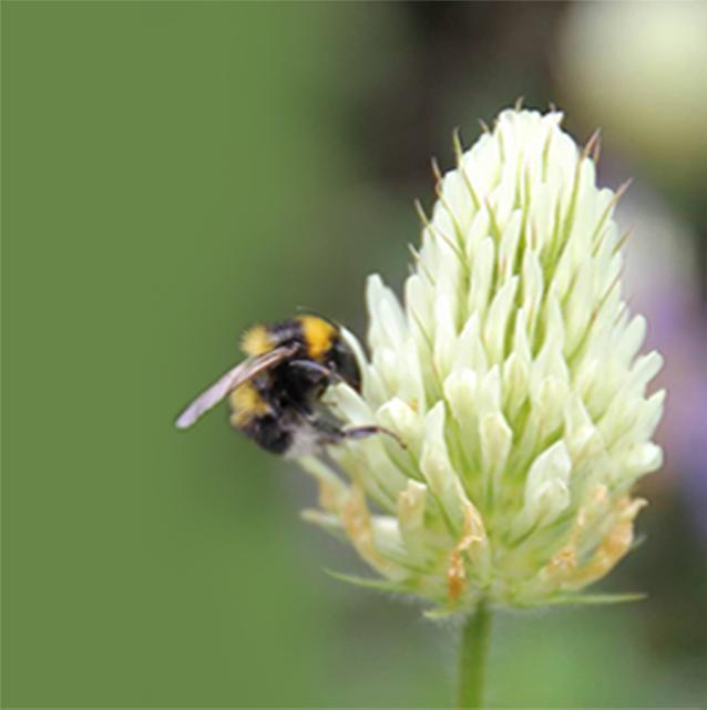 home-giaflowers-3